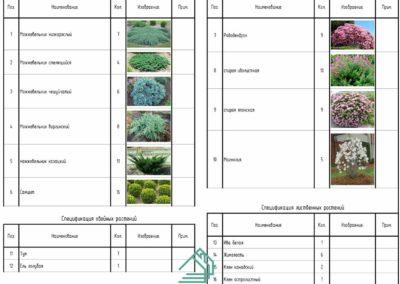 Спецификация кустов с фотографиями как выглядит растение